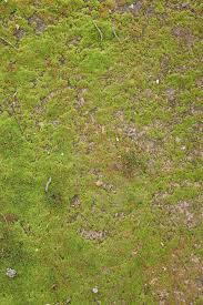 ground textures grass and ground background www myfreetextures com 1500 free