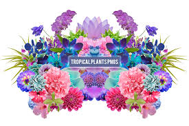 Tropical Plants Pictures - tropical plants png u0027s by summer to the spring on deviantart