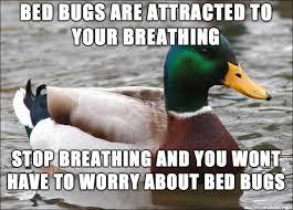 Bed Bug Meme - how to avoid bed bugs meme on imgur