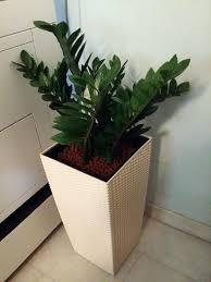 office design office pot plants office pot plants durban office
