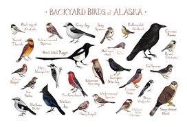 Nj Backyard Birds by New Jersey Backyard Birds Field Guide Art Print U2013 Kate Dolamore Art