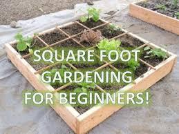 collection garden boxes for vegetables photos free home designs
