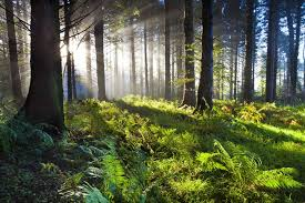 21 reasons why forests are important mnn mother nature network