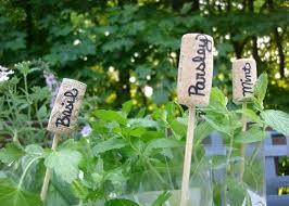 potted herb garden design photograph mini herb garden u2013