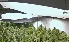 grow rooms for medical marijuana the weed scene