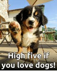 High Dog Meme - high five if you love dogs dogs meme on me me