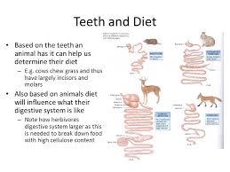 customer testimonial digestive system of mammals ppt