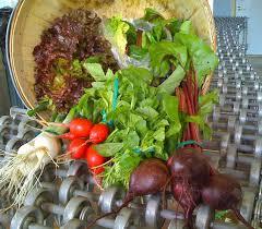 henry u0027s farm a diverse sustainable illinois vegetable farm