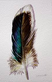 watercolor feather study inspirations art that inspires
