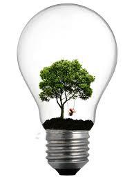 tree lightbulb pawnile new subject matter