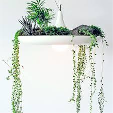 Wohnzimmer Lampe Lipo Pflanzenstrahler Pflanzen Kronleuchter Deckenlampe Deckenleuchte