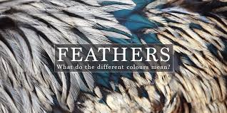 feathers appear when are near what is the meaning of