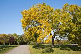 a gardener s guide on how to grow an elm tree easily
