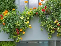 What To Plant In Window Flower Boxes - window box edibles hgtv