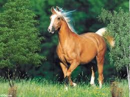اجمل الخيول انظروا لجمال وروعة الخيول images?q=tbn:ANd9GcQ