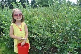 does spirit halloween take checks blueberry picking farms in seattle
