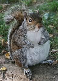Squirrel Meme - fat squirrel meme generator