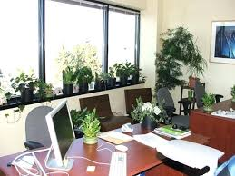 best plant for office best desk plants dynamicpeople club