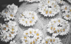 Decorative Flowers by Interior Decorative Flowers 6988925