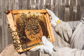 2016 01 13 18 12 31 keeping backyard bees