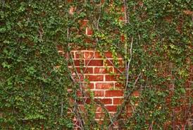 Trellis On How To Hang A Trellis On Brick Wall Home Guides Sf Gate