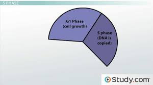 cell growth u0026 the process of cell division videos u0026 lessons