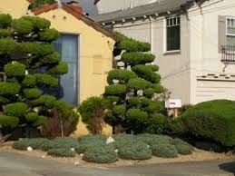 Topiary Cloud Trees - 328 best garden design topiary images on pinterest topiary