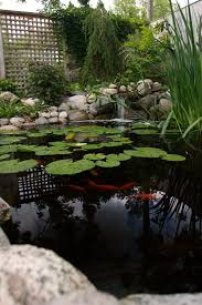 Small Backyard Ponds And Waterfalls by 587 Best Waterfall For Koi Pond Design дизайн водоёмов