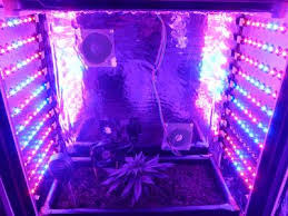 growing autoflower with led lights first grow joint doctors diesel ryder led micro grow the