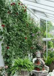 Climbing Plants For North Facing Walls - projects raworth gardens