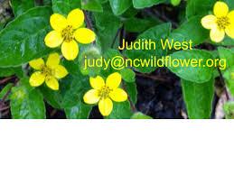 nj native plant society the triad treasures natural diversity north carolina native
