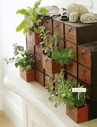 indoor herb garden ideas homesteading indoor gardening tips
