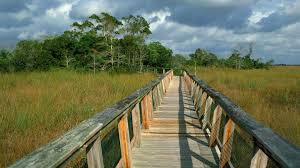 backgrounds for photography national park florida everglades boardwalk hammock mahogany