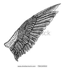 vintage wing isolated on white background stock vector 645826099