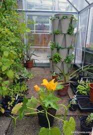 edible gardening in a greenhouse u0026 container garden lovely