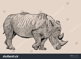 rhino sketch line jpeg file stock photo 114524866 shutterstock