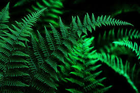 quabbin ferns wallpaper for desktop and iphone notes from the