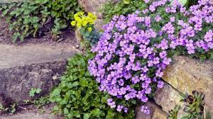 pflanzen fur steingarten winterhart u2013 godsriddle info