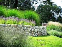 what is the tall green ornamental grass in the back behind the