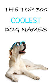 cool dog names 300 awesome puppy name ideas
