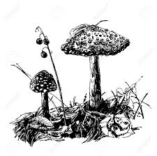 drawing is not edible mushroom fly agaric sketch graphics hand