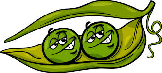 2 peas in a pod like two peas in a pod stock vector illustration of