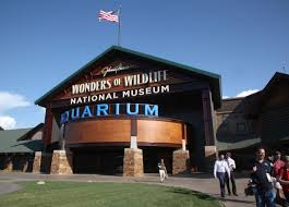 kelly bostian wonders of wildlife museum and aquarium designed to