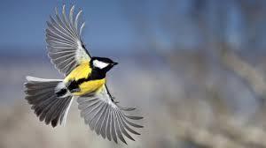 cool sparrow tattoos blue bird flying bird still flying birds bird tattoo ideas