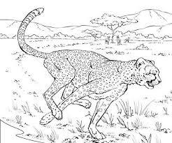 Coloriages à imprimer  Animaux carnivores numéro  8832