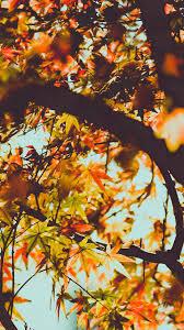 fall tree leaf autumn nature mountain iphone 6 wallpaper