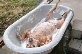 can my use the tub bullfrog spas