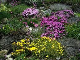 Small Rock Garden Pictures by Rock Garden Beds With Small Shrubs Rock Garden Plants Can Spruce