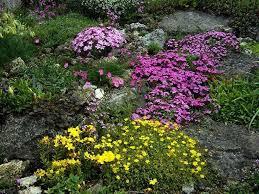 plants for rock gardens rock garden plants can spruce up one u0027s surroundings wearefound