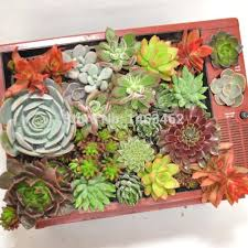 Indoor Plant For Office Desk Office Desk Plants For Office Desk Your Array Small India Plants